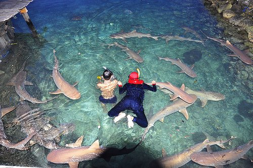 Karimunjawa tours, sights and activities
