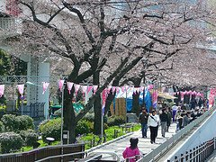 Tokyo tours, sights and activities