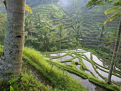 Bali tours, sights and activities