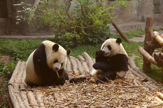 Chengdu tours, sights and activities