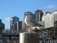 Sydney tours, sights and activities